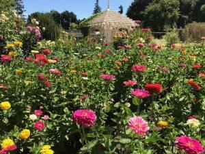 Elizabeth Gamble Garden. Palo Alto, CA