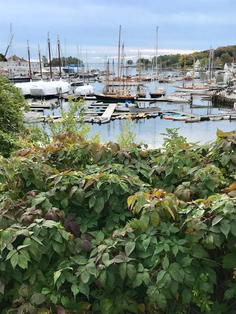 Camden Maine. October 2019.