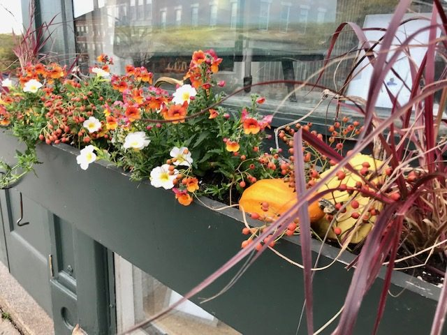Fall Colors in Window Box. Belfast Maine. October 2019.