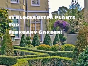 13 blockbuster plants for the February garden!