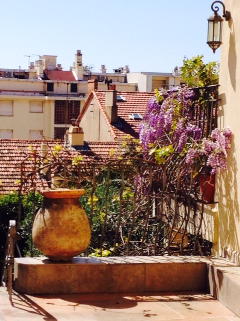 Blooming Wisteria Cannes, France. April 7, 2015