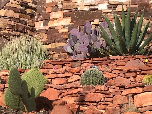 Succulents and Cacti in red rock raised bed, Sedona AZ