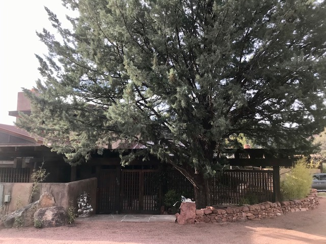 Old Cupressus arizonica sheltering Sedona home