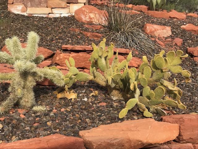 Xerophytic plants, Sedona Arizona planting design