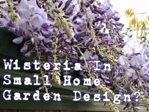 Wisteria in small home garden design
