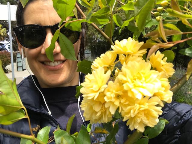 Rosa banksiae 'Lutea' San Francisco, CA