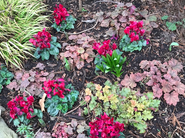 Winter flowers and color
